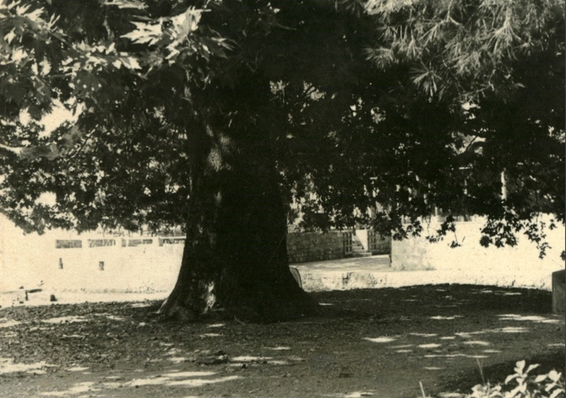 1938-Mlini-3